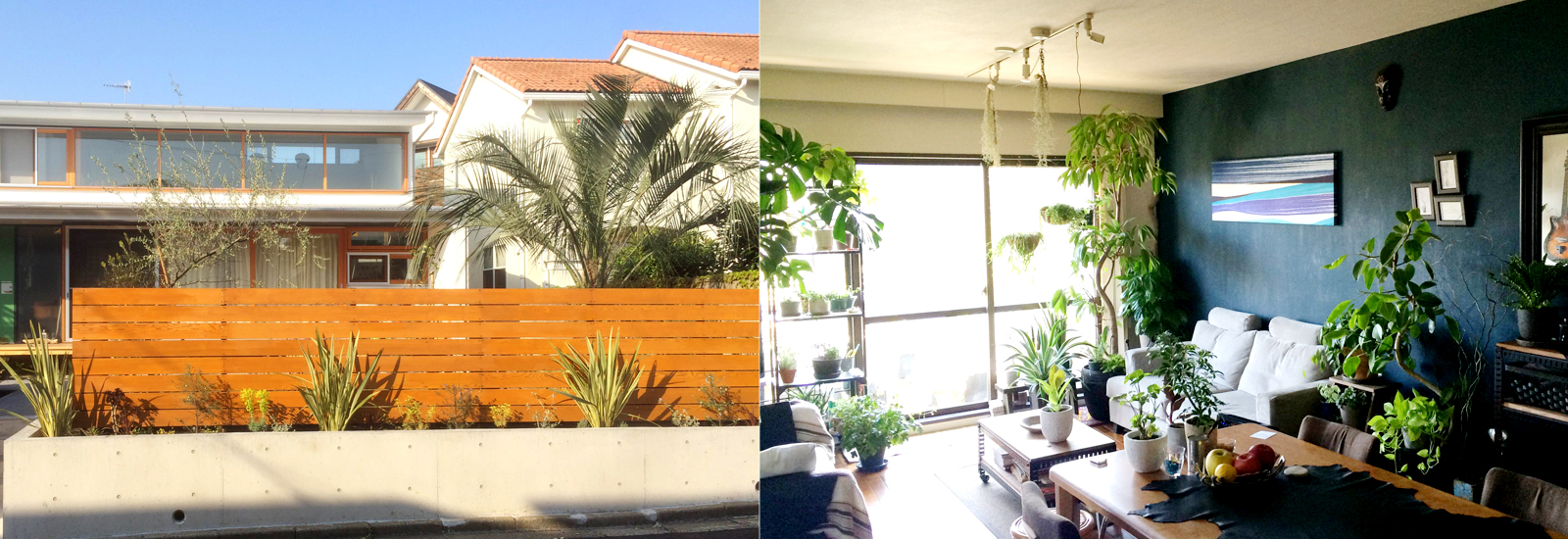 garden trees and house plants