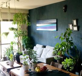 観葉植物(室内用植物)