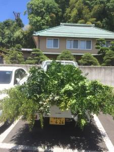 新たに植える植木たち