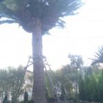 日中のヤシの木お庭から