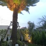 照明設置後ヤシの木お庭から