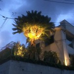 照明設置後ヤシの木その3
