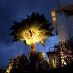 照明設置後ヤシの木その2
