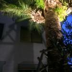 照明設置後やしの木