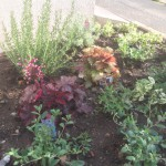 道路側の植栽スペース